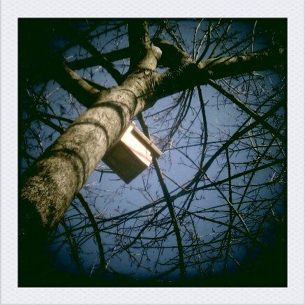 Bird watching / Bird Garden Dublin  - image of birdhouse in tree branches with blue sky