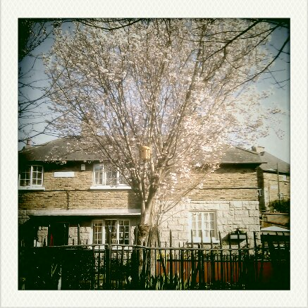 Things to do in Dublin / Nature Activity Ideas - housing estate with cherry blossom tree with birdhouse in it