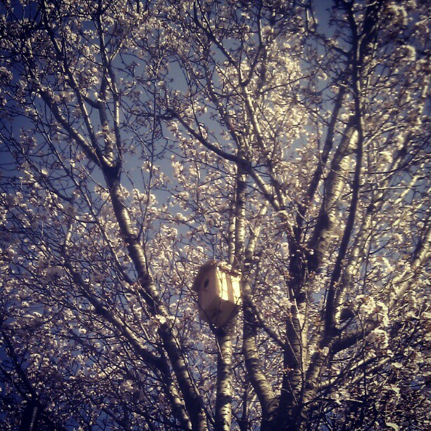 instagram for android cherryblossoms & birdhouse